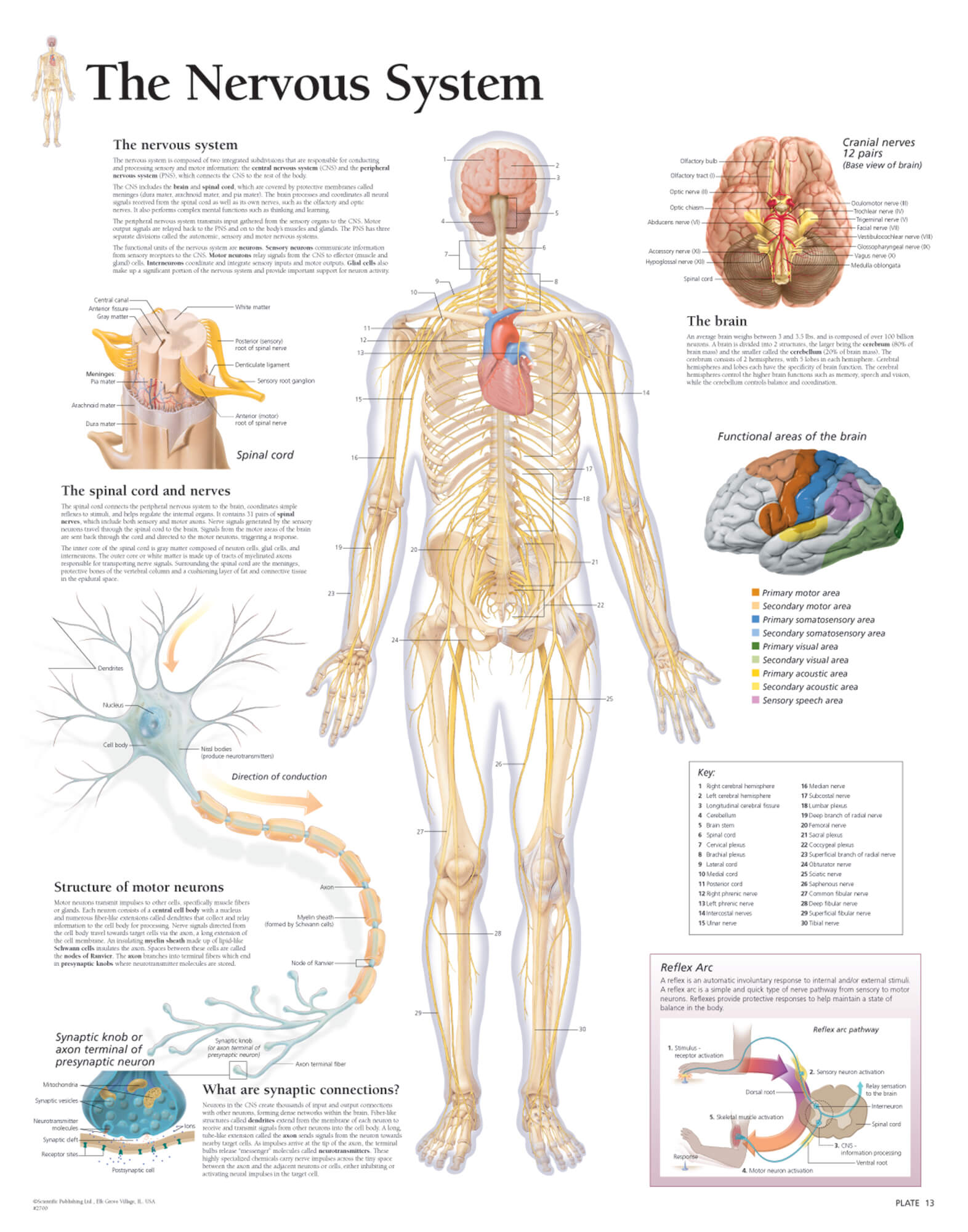 The Nervous System 2700